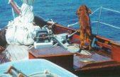 Σκύλος δίνει μαθήματα οικολογικής συνείδησης