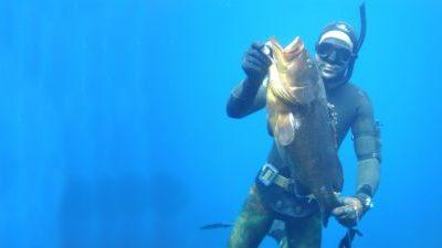 Ροφός – Τρόπαιο για κάθε ψαροντουφεκά