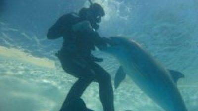 Κολυμπώντας με δελφίνια… Η μέθοδος θεραπείας και τα οφέλη για την υγεία