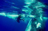 Τεράστια φάλαινα προστατεύει δύτη από καρχαρία